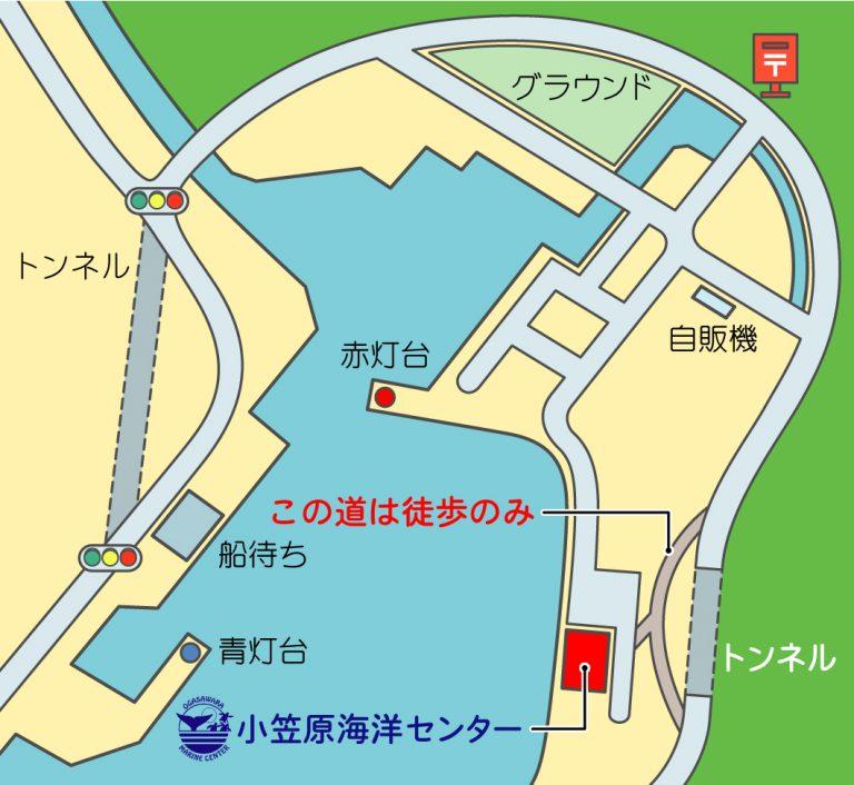 """【小笠原海洋センター】""""カメセンター""""のアクセス"""