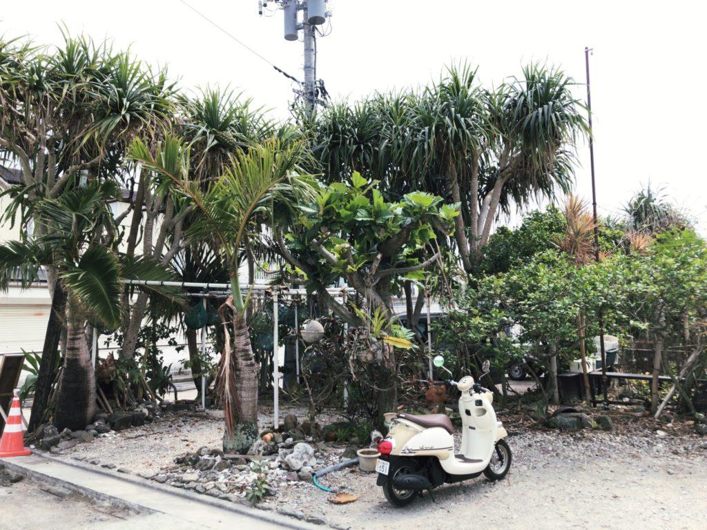 丸丈 父島の前にある庭