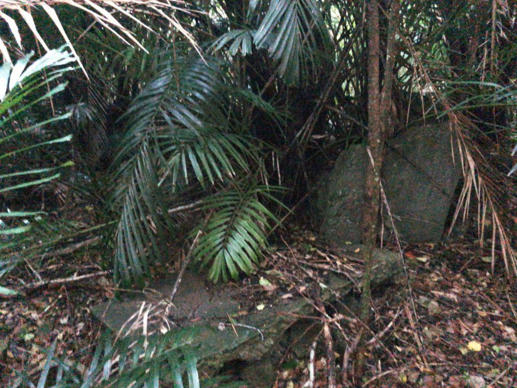 父島要塞大村砲台跡の道はジャングルのよう
